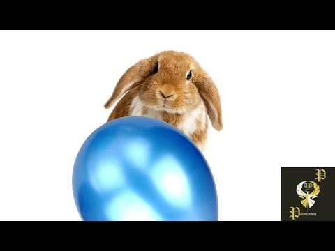 Balloon Popping Pets Compilation I PP