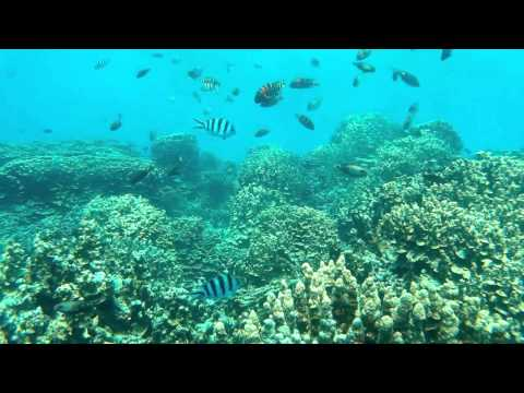 Under water clip with sj4000 in Guam