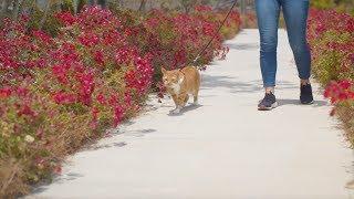 Premier Pet Cat Harness & Leash Quick Overview