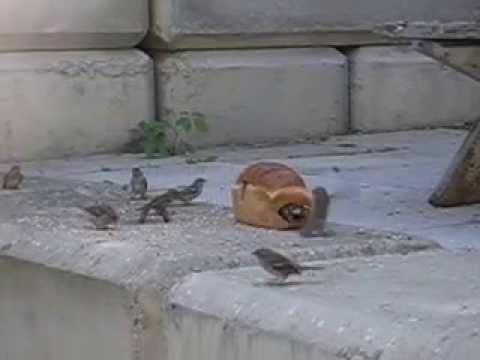 Bird sanctuary :)
