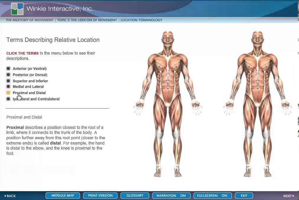 ANATOMY MOVEMENT MUSCLE LOCATION TERMINOLOGY - YouTube