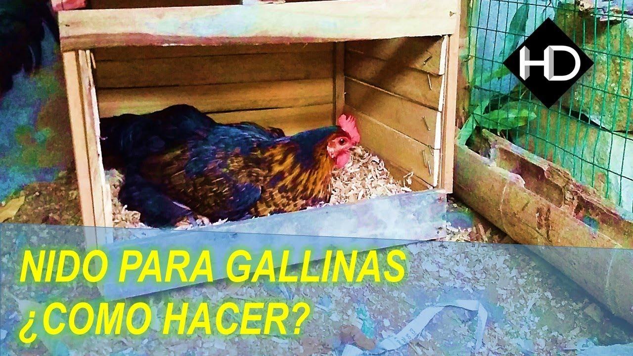 Como hacer un nido para tus gallinas paso a paso youtube for Jaulas para cria de peces