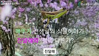 2020 서울국유림 : (식물이야기) 철쭉과 진달래 어…