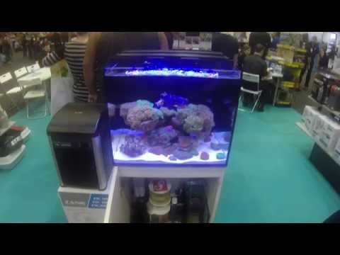 Red Sea Reefer at the Gold Coast Expo
