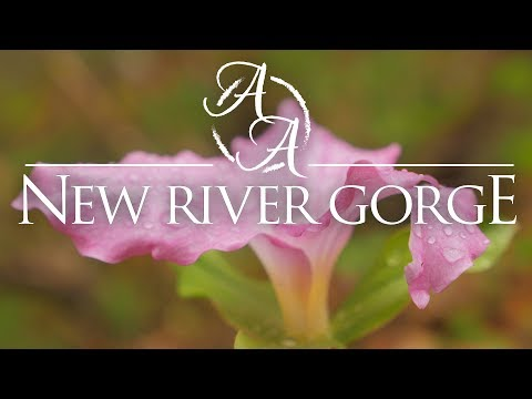 New River Gorge in 4K | Bushcraft Backpacking, Camping, and Hiking Glade Creek in the Spring