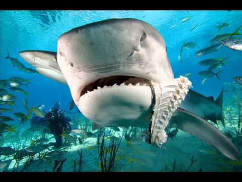 dangerous sea animals most deadliest creatures ocean animal danger