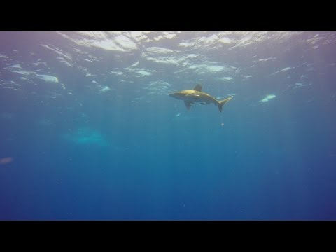Island Divers Egypt Liveaboard Red Sea 2015