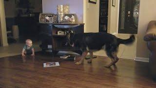 これは1日中見てられる…追いかけっこする赤ちゃんと犬(動画)