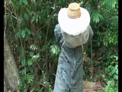 Production videos from Wadep: Honey - Nkwanta, Ghana