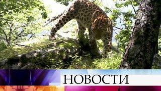 ВПриморье открыли крупнейший вмире Центр посохранению дальневосточного леопарда