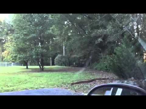 The Deer In Our Yard In Georgia - Zennie62