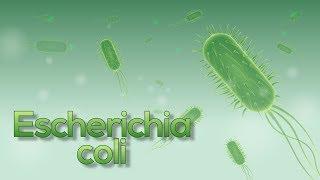 ¡Escherichia coli (E. coli) en 5 minutos! (Animación)