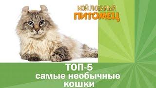 Самые необычные домашние кошки. ТОП-5