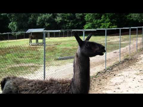 zoo de Marcelle (Outeiro de Rei-Lugo).MP4