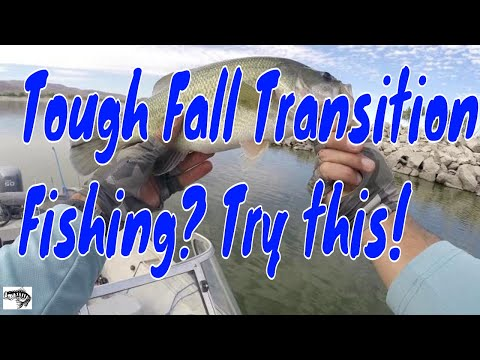 Summer To Fall Transition Bass Fishing With Crankbaits -Nevada Fishing