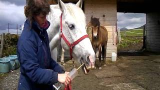 Training a horse to have his teeth cleaned (mouth flushed)