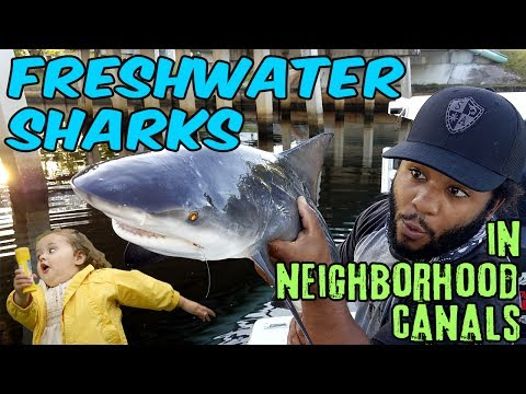 FRESHWATER SHARKS in NEIGHBORHOOD CANALS!!! + Bloopers