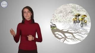 Биология 6 Корень  Строение и функции