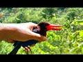 Menangkap Burung Tengkek Udang Induk Anaknya Di Dalam Lobang Sarang  Mp3 - Mp4 Download