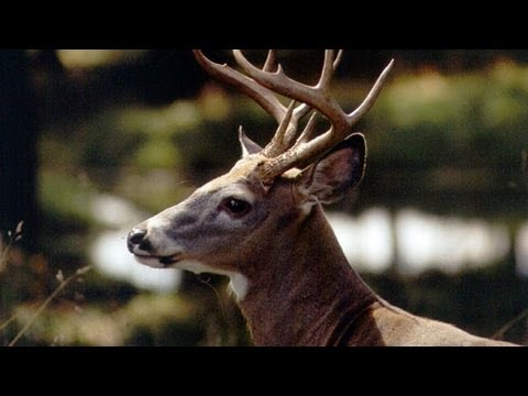 Deer Herd Management: An Outdoor Journal Special (2013)