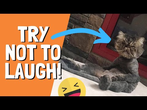 Try Not To Laugh Impossible #1 ULTIMATE CAT FAILS COMPILATION 2019 Cat acting weird being jerks 2019