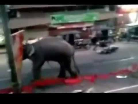 Wild Elephant Attack a Jeep in Jungle - Kerala India - YouTube  Kerala Elephant Attack Youtube
