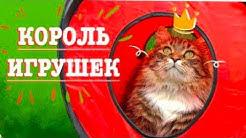 Король Игрушек. Что выберет смешной Сибирский кот?
