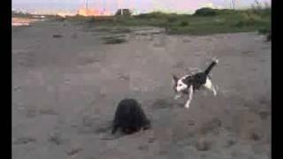 Cairn Terrier Mix Und Jack Russel Mix  - Jimmy Und Pebbels