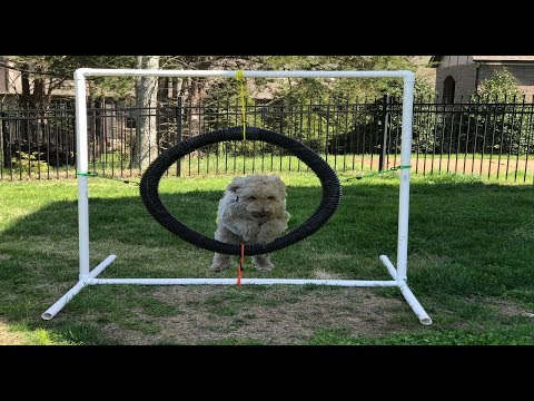 How To Build Dog Agility Equipment