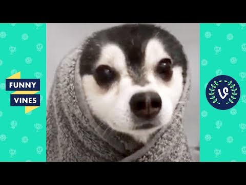 TRY NOT TO LAUGH – New Year, New Funny Animals!