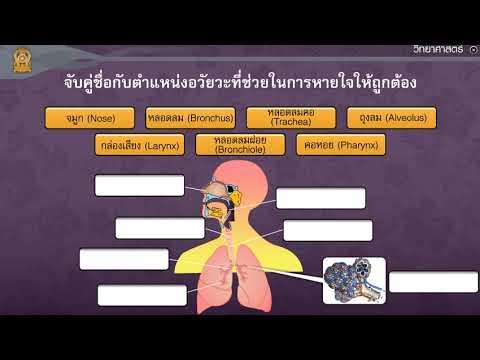 ระบบหายใจของมนุษย์ ตอนที่ 1 วิทยาศาสตร์ ม.2