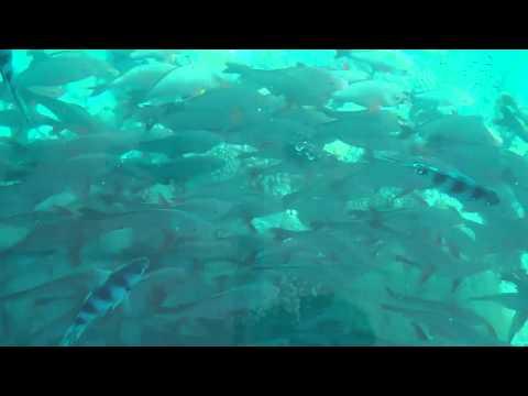 Glass Bottom Boat Rangiroa, French Polynesia