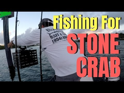 How To Fish For STONE CRABS In Florida