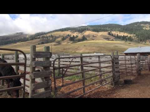 Life on the Road with the Calgary Stampede Bucking Horses