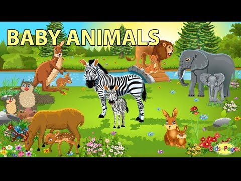 Baby Animals Names And Sounds