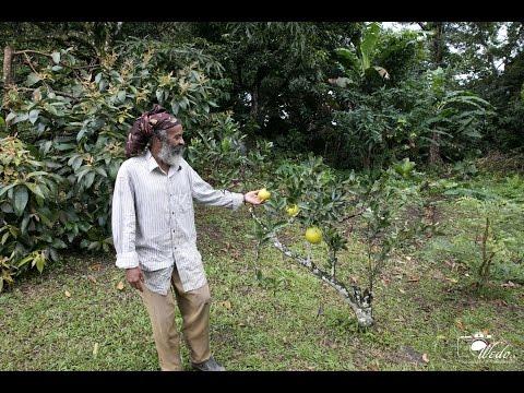 Broad Meadows Organic Farm Dominica