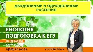 Двудольные и Однодольные растения. Теория и практика  ЕГЭ/ОГЭ 2017.