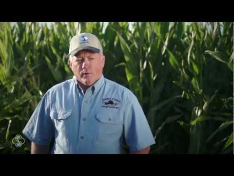 Amana Farms achieve impressive yields in 2012 drought season