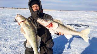 КРУПНЫЙ СУДАК КЛЮЁТ ОДИН ЗА ДРУГИМ Я В ШОКЕ Рыбалка на жерлицы 2021