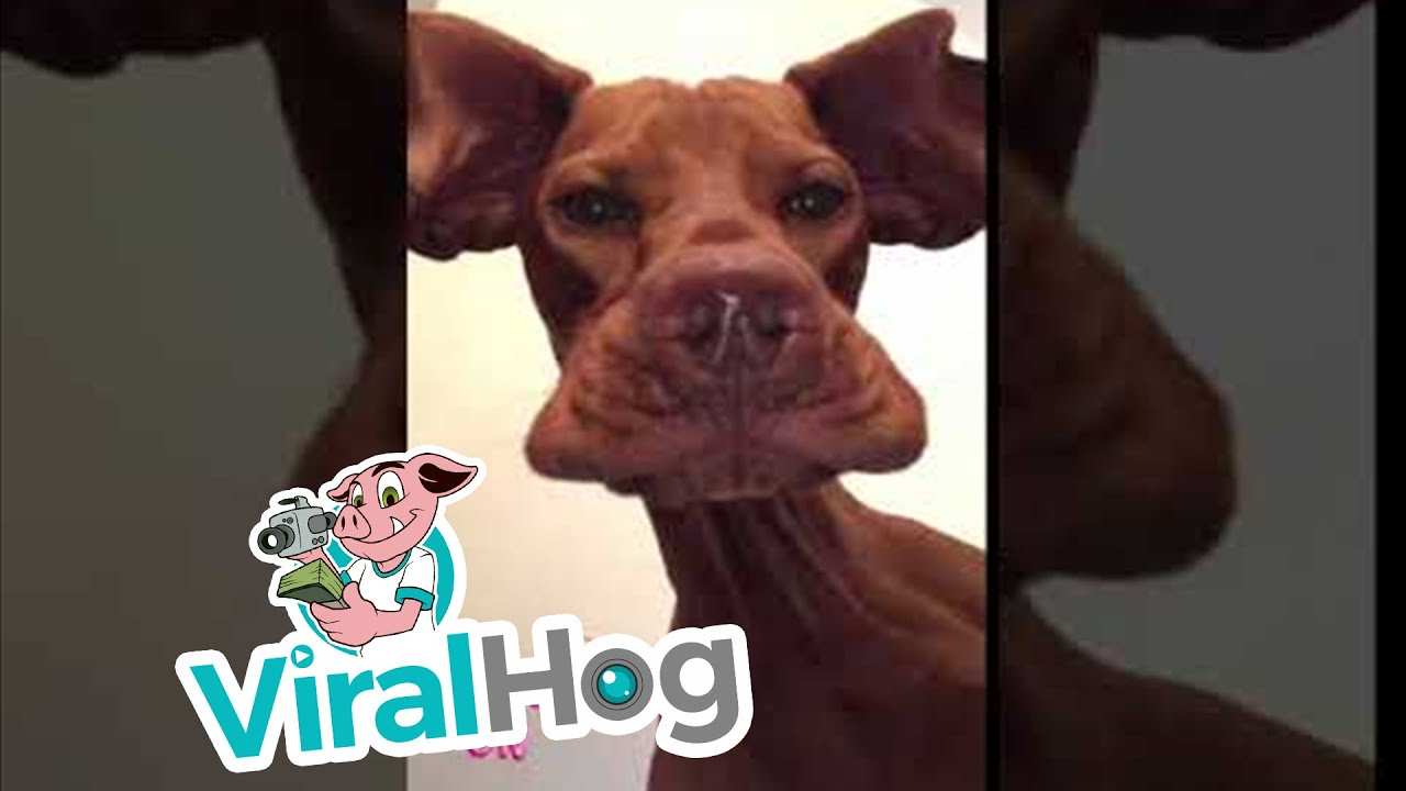 Precious Pooch Makes Goofy Face