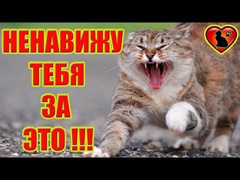 6 вещей, за которые Ваша Кошка Вас Ненавидит!!!