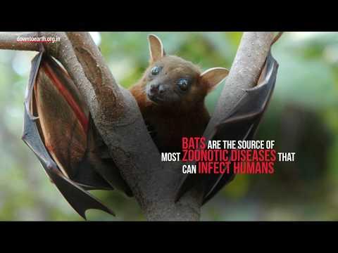 why-do-bats-carry-so-many-viruses?