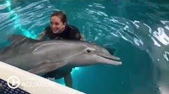 Playtime with Winter the Dolphin