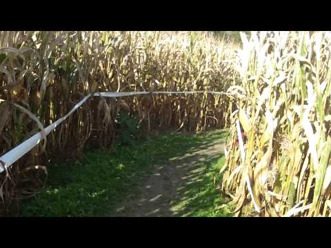 Pushing A Stroller Thru A Corn Maze Song