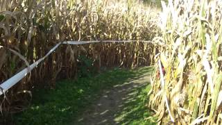 Pushing A Stroller Thru A Corn Maze Song