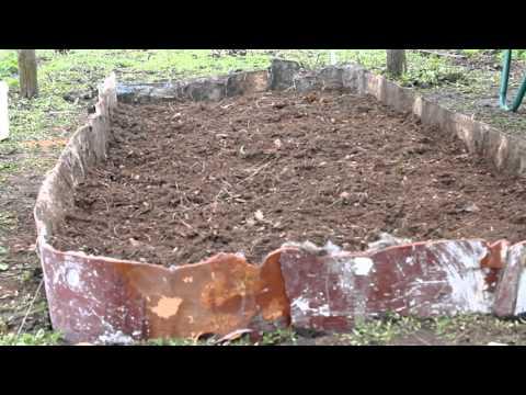 Посадка клюквы садовой