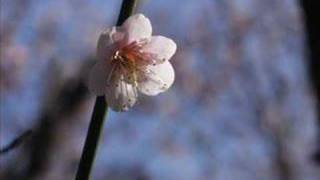 Yuki Kajiura - Grandpa's Violin