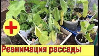 видео Заморозки в теплице - как спасти рассаду в теплице из поликарбоната от морозов