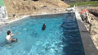Swimming Is Best Therapy For Limping Dog