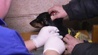 В Харькове проводится плановая вакцинация домашних животных